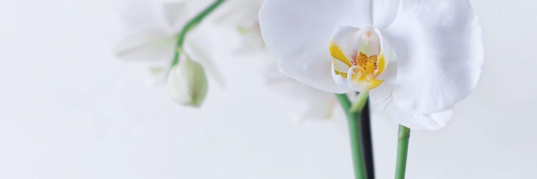 성령님과 동행하는 인생은 아름답다. (행8:9-20)